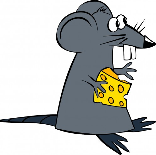 This photo of a rat symbolizes the band's name.