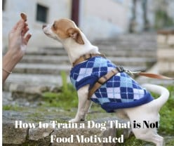 Training a Dog That is Not Food Motivated