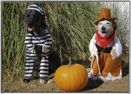 The dog arrives on the Halloween scene