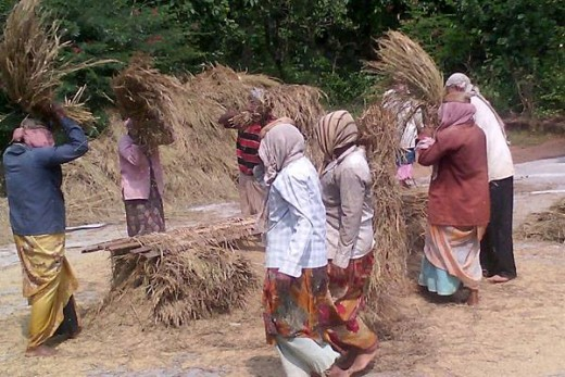 Women threshing the paddy over traditional mat