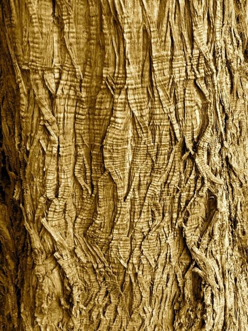 Tree Bark Surface - Botanic Gardens