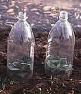 Use empty soda bottles and milk cartons as cloches by cutting the bottoms out. Image: Garden Organic