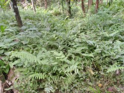 Utilizing Weeds – Making Wealth out of Waste