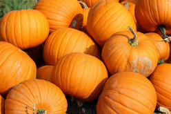 The Delectable Tastes of Pumpkin in Fall