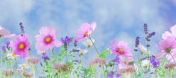 Garden Plants - Plants for Gardening Ideas