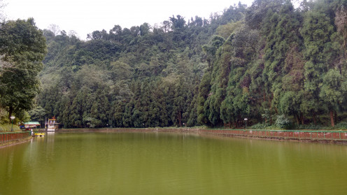 The green lake amidst the pine vegetation