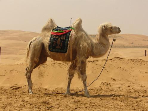 Easier For Camel Pass Through Eye of Needle