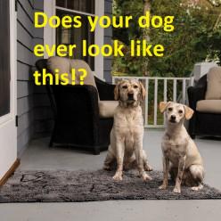 Dog Gone Smart Dirty Dog Doormat