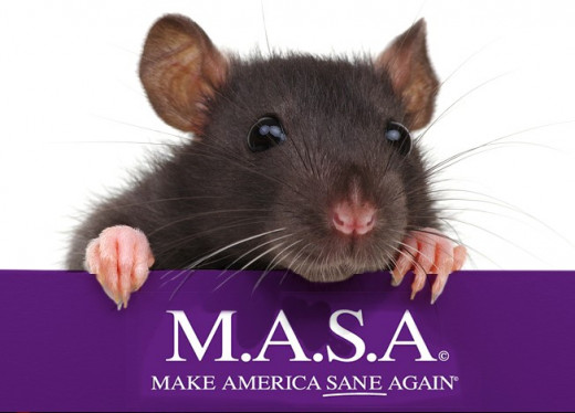 Rat Gazing Over Wall With MASA Logo On Front