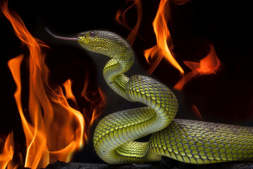 Snake In The Pit Of Hell