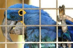 A Macaw To Remember