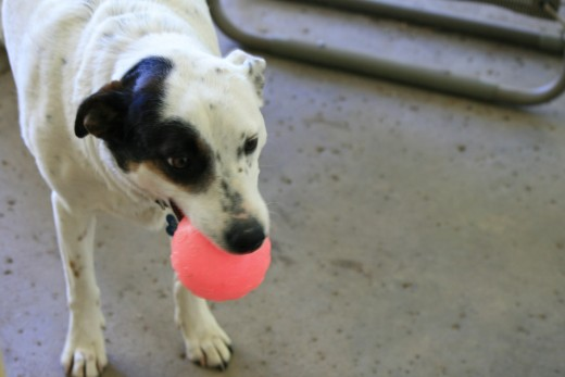 """Sophia has a """"Glow in the dark"""" ball to play catch at  night!"""