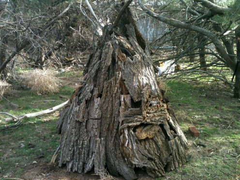 A teepee made of sticks and bark from fallen trees makes a fun place to play and dream.