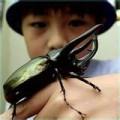 Beetle Wonders - Part I