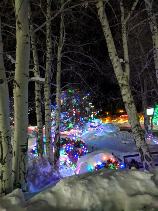 Evergreen trees in the snow lit up for Christmas in Tusayan, AZ outside of Grand Canyon