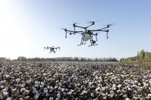 Drones conducting spraying o cotton field   Pixabay