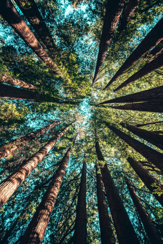 Looking above the beautiful trees on a sunny day. Photo by Casey Horner on Unsplash.