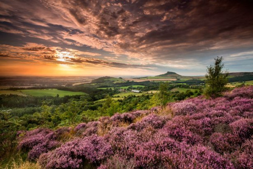 Roseberry Topping from Gribdale on the  northern edge of the Cleveland Hills