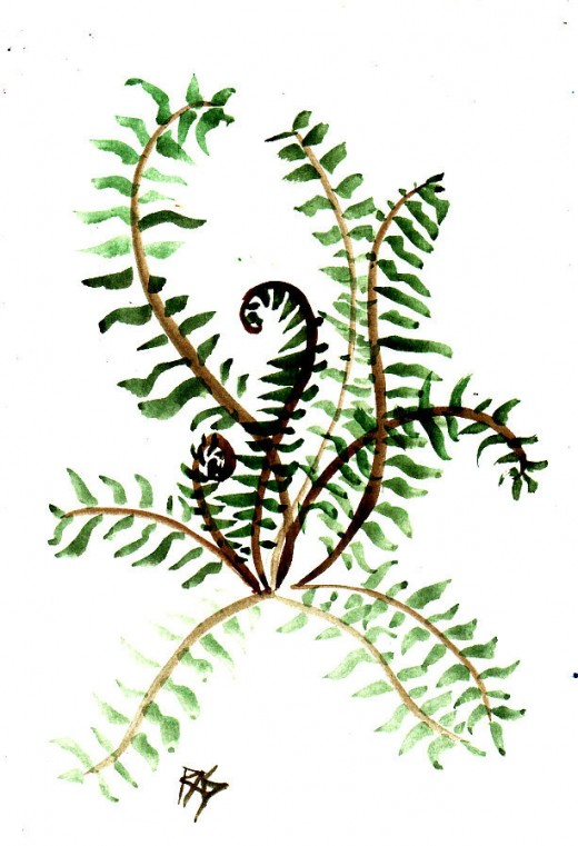 "Fern, watercolor, 6"" x 9"" by Robert A. Sloan"