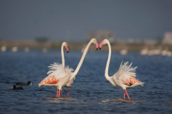 Why Chilika Lake Is Called A Birds Paradise In Odisha, India