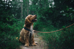 How Dogs Help The Visually Impaired
