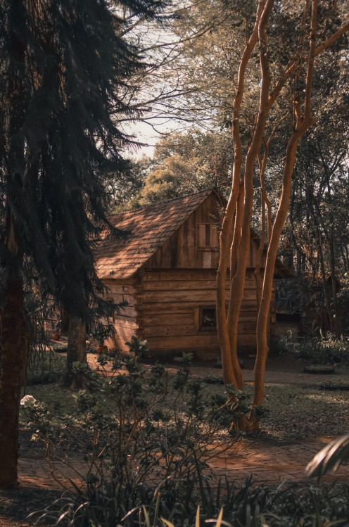 An empty log cabin still stands along with its many memories.