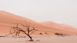The Desert Around Dubai is Alive With Wild Life