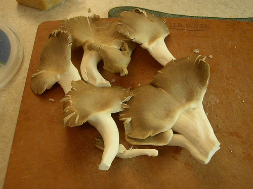 Oyster Mushroom http://www.flickr.com/photos/thevince/417500625/