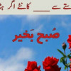 Muhammadqasim123 profile image