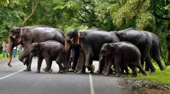 Traveling by Road From Jorhat to Dimapur and Paying Tribute to Elephant Herds