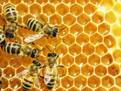 Study shows effect of atmosphere and topography on ecotypes of honey bees.
