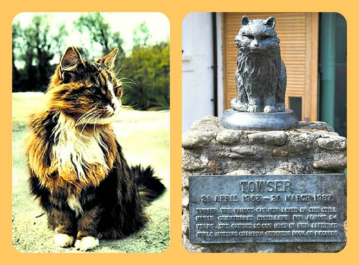 """Towser ""The Mouser"" (1963 - 1987) of Glenturret Distillery in Crieff, Scotland, holds the Guinness World Record for the most mice caught (28,899)"" Wikipedia"