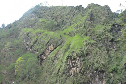 Beautiful Green Landscapes