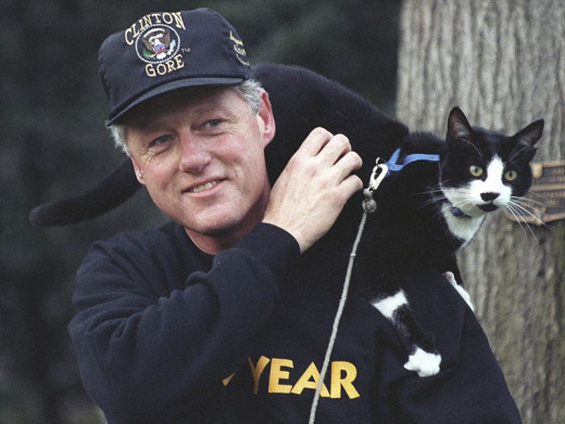 """Socks perches on President Clinton's shoulder in 1993"" Wikipedia"