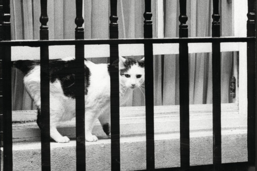 Longest serving Chief Mouser at 10 Downing Street