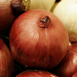 The Mighty Onion