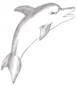 The dolphin looks almost finished, but from here you could add colour or really sketch in that detail.