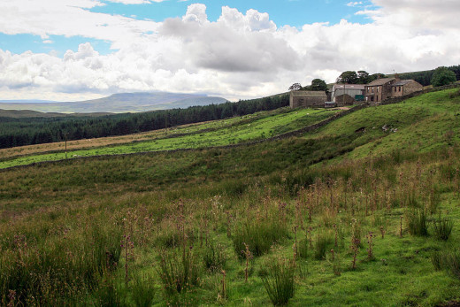 Cam Houses near Ingleborough and Whernside