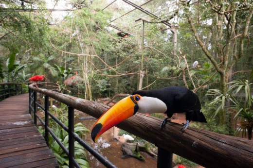 Don't forget about your selfie with the toucan when you visit the Parque das Aves!