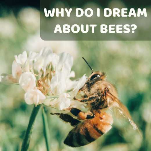 Not sure why you've been dreaming of bees or what it means? Read on to find out.