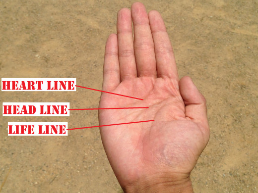 The three (3) most recognizable palm lines, the heart line, the head line and the life line.