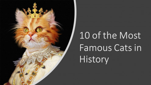 10 of the Most Famous Cats in History and a Tribute to Our Feline Friends