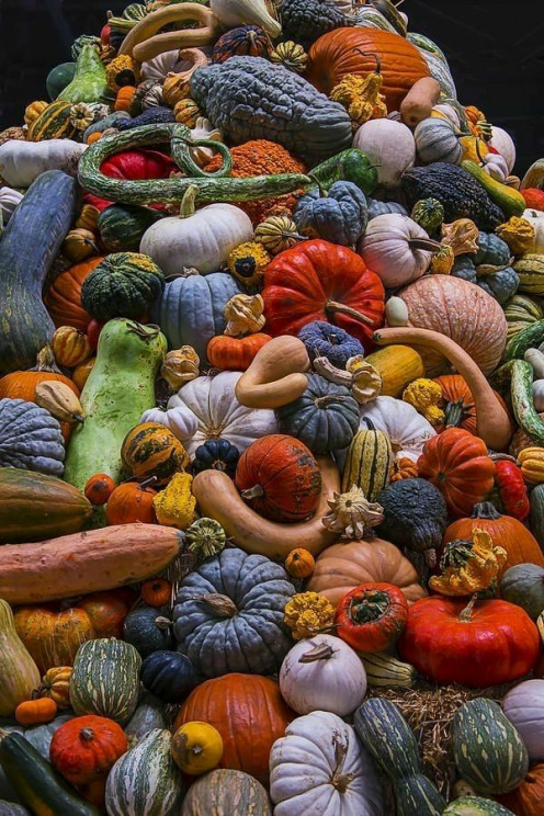 Winter squashes and pumpkins come in an imaginative array of shapes, colors, sizes--and tastes.