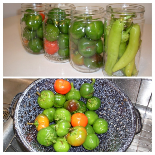 Pickled cherry peppers are a highly cheering sight to me.