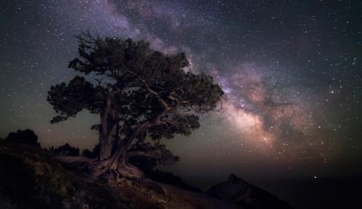 A tree under the Milky Way
