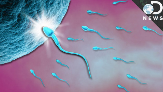 A singular sperm fertilizes a female egg, after that it is sealed up