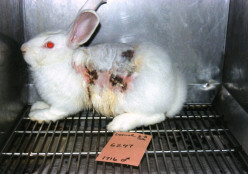 Animal Testing Is Killing the Animals