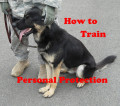 How to Train a Dog for Personal Protection