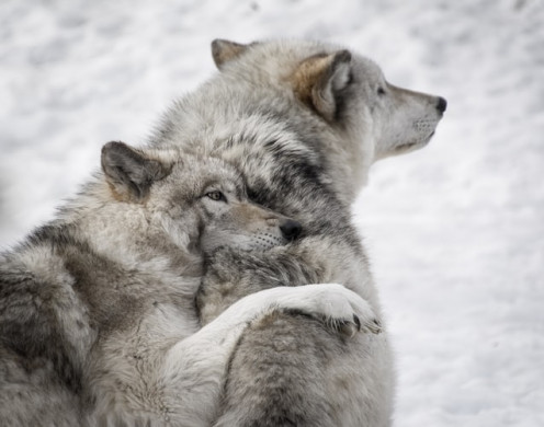 Can Animals Feel Empathy?