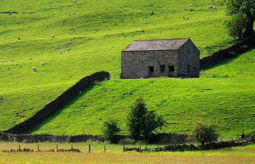 No view of Swaledale - or any partt of the Dales for that matter - is complete without a stone barn set amid dry stone wall enclosures